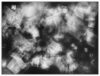 2018_EAjtay-Untitled-X-Ray_16.25x21.5in_19